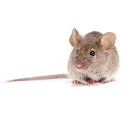 mouse0
